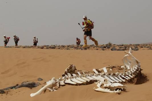 Een archiefbeeld van de Marathon Des Sables. Op de voorgrond ziet u het skelet van een kameel.