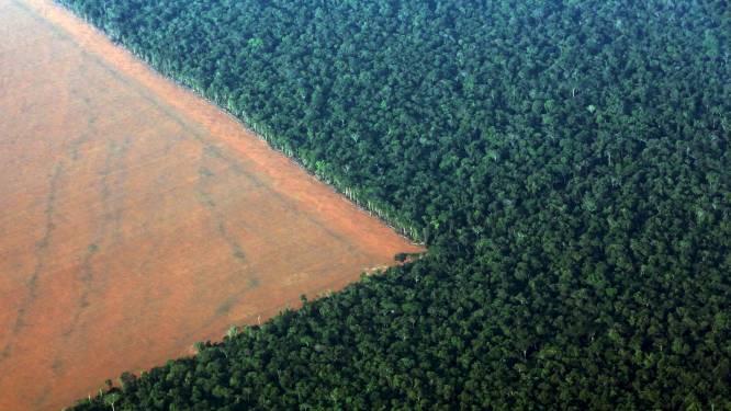Op 1 jaar tijd bos zo groot als half Vlaanderen verdwenen: ontbossing Amazonewoud op hoogste niveau in tien jaar