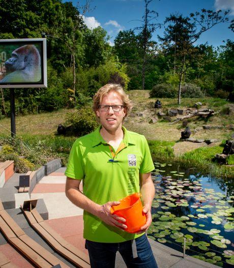 Dik (38) houdt 'zijn' apen in Apenheul zo veel mogelijk op afstand
