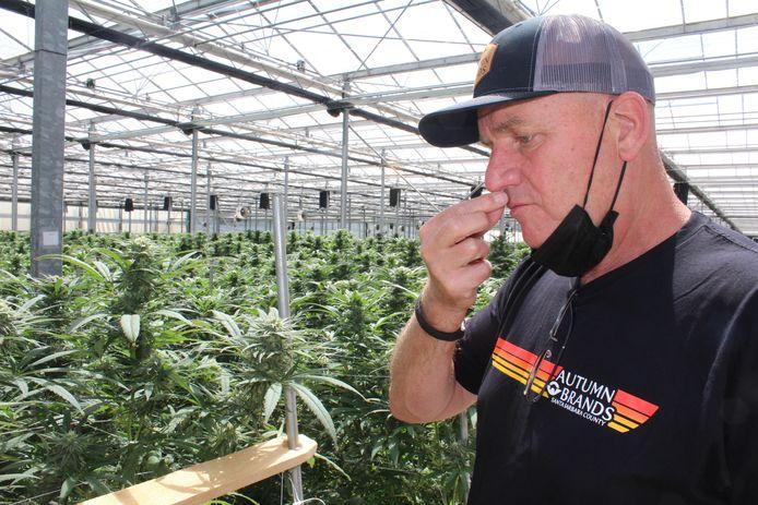 Laat je niet gek maken, adviseert Hans Brand de Nederlanders die binnenkort mogen beginnen met legale wietteelt.
