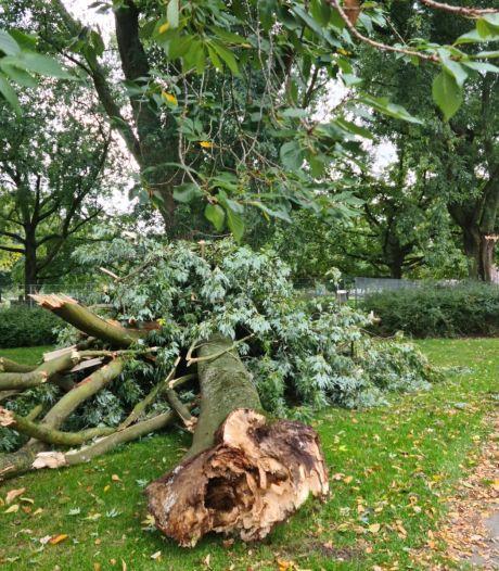 Afgebroken tak bij Hortensiapark in Helmond was van binnen rot; boom fors gesnoeid na incident