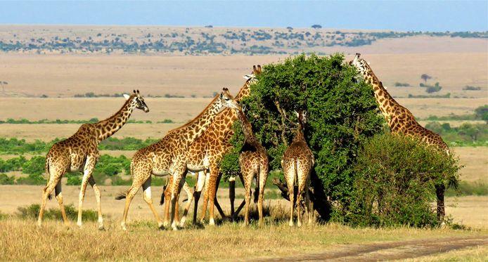 Matthieu Jansen maakte deze foto in Afrika.