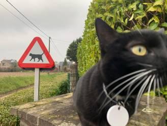 """'Opgepast: overstekende katten'. Bewoners plaatsen eigen verkeersbord in voortuin, en dat heeft ongekende gevolgen: """"Iederéén wil nu zo'n bord"""""""
