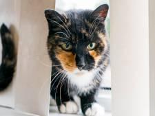 Ex-voorzitter De Kattenmand opgepakt, woning doorzocht