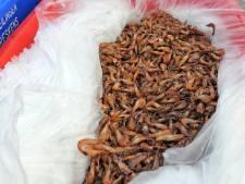 Sluis probeert Vlissingen pas af te snijden voor behoud garnalenveiling in Breskens