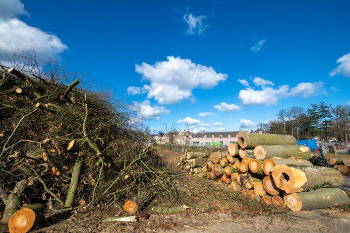 Het voorterrein van Paleis Het Loo (op de achtergrond) ligt vol met boomstammen van gekapte beuken.