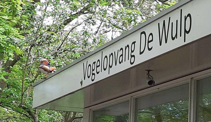 Beeld ter illustratie: vogelopvang De Wulp in Den Haag