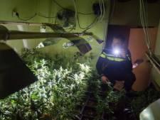 Politie prikt raak bij controle bedrijven in Malden: wietplantage met bijna 600 planten ontdekt