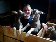 Oude én nieuwe generatie geitenfokkers vertellen over hun passie: 'Een ander laat de hond uit, ik voer mijn geitjes'