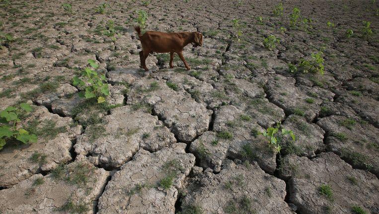 Een schaap zoekt naar voedsel in een droog waterreservoir in Lushan, in centraal-China. Beeld epa