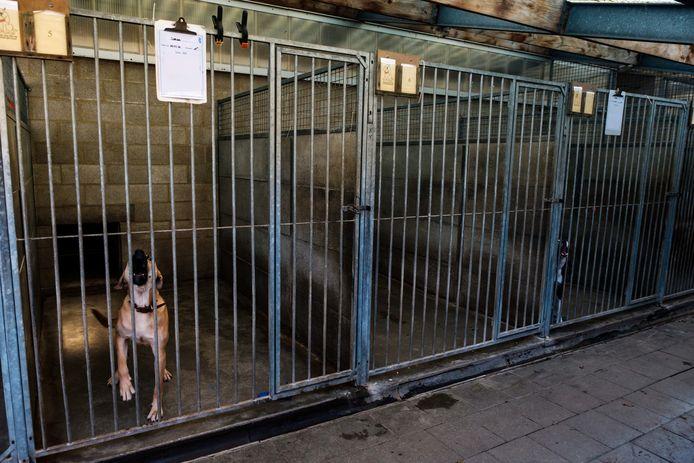 Heel wat hondenhokken van dierenasiel Het Blauwe Kruis van België in Wommelgem staan leeg