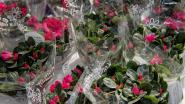Kaprijke gaat tiende jaar op rij plantjes verkopen voor Kom op tegen Kanker