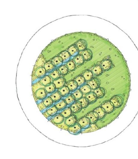 Kritiek op 'onveilige' groene rotondes in Soest