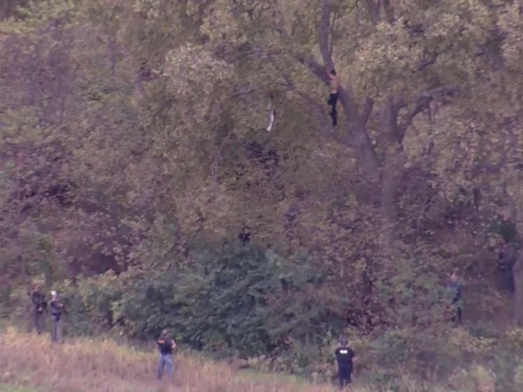 Man vlucht weg van politie... in een boom