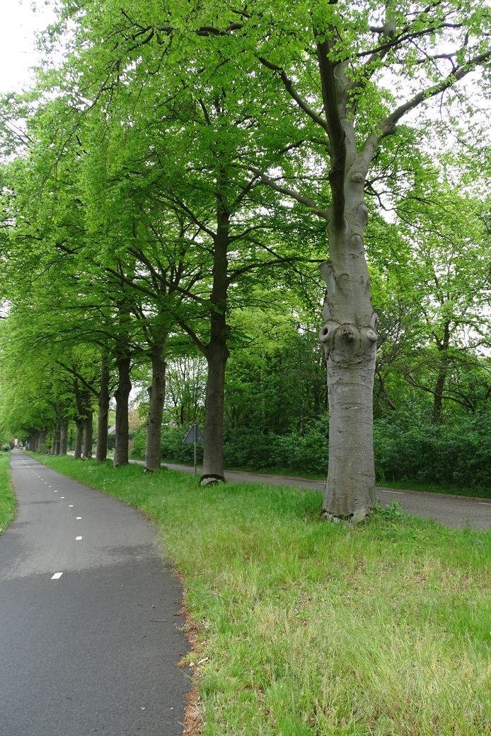 Het fietspad tussen Knegsel en Vessem waar de agressieve bosuil toesloeg.