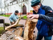 Hij is gevonden, die droom-eik! En hij krijgt een tweede leven in een Romeinse boomstamkano