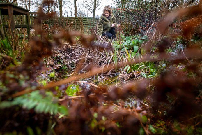 """De tuin winterklaar maken? ,,Nee joh, laat dat bruine spul gewoon liggen. Dieren vinden er voedsel en kunnen er schuilen"""", zegt ecologische hovenier Marjan Deurloo uit Harderwijk."""