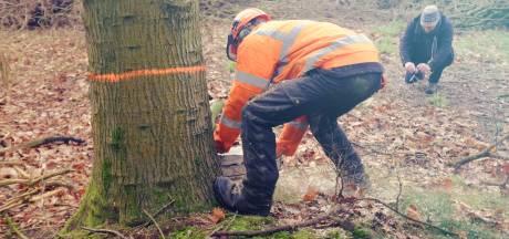 LocHal: zitten op banken uit Tilburgse bomen