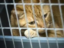Dierenbescherming: 'Pas op voor beunhazen'