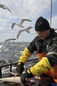 Noren en Russen pikken Nederlandse kabeljauw in, honderden banen op de tocht