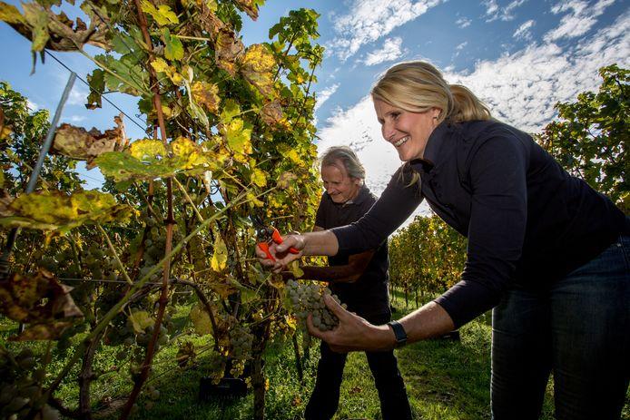 Gert-Jan Voortman, hier met zijn partner, Diana van der Biezen, aan het werk op Gelders Wijngoed Laren.