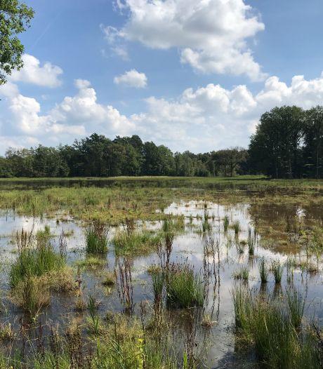 Wooldse Veen in Winterswijk is weer nat en drassig: 'Het gebied kan er weer even tegen'