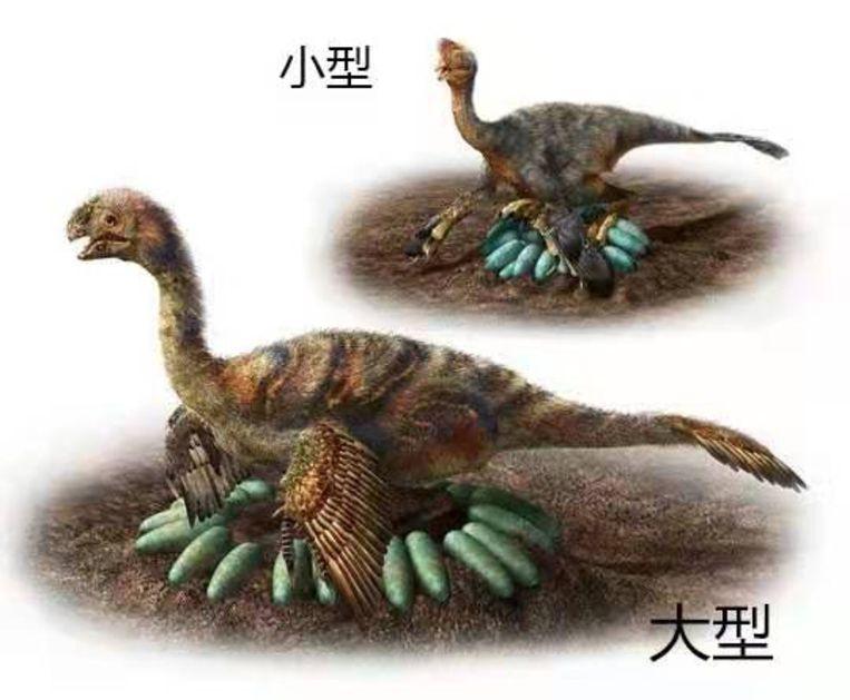 Afbeelding van een broedende oviraptor. Beeld Bi Shundong