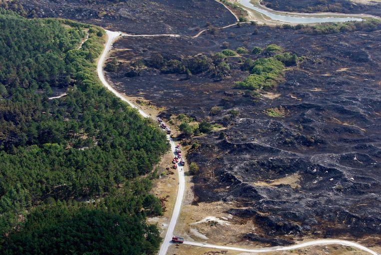 De bosbrand in 2009 in de duinen bij Schoorl.. Beeld anp