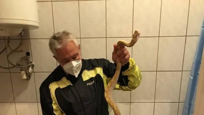 Slang bijt man in de edele delen tijdens toiletbezoek