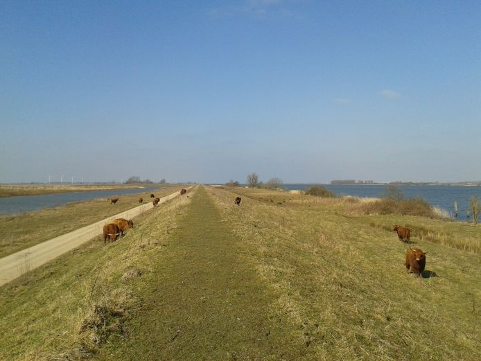 Vanuit Willemstad vaart Expeditie Haringvliet onder meer naar natuureiland Tiengemeten