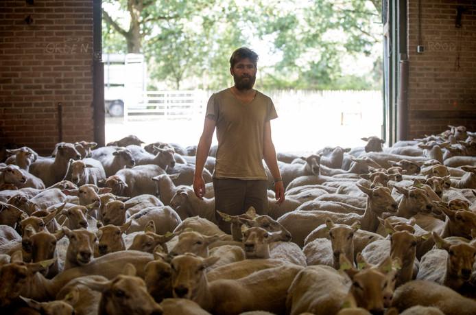 Schaapsherder Matthijs de Haas, die de 250 schapen op de 'Big Sheep Tour' begeleidt, in Schaapskooi De Plaetse in Heeze.