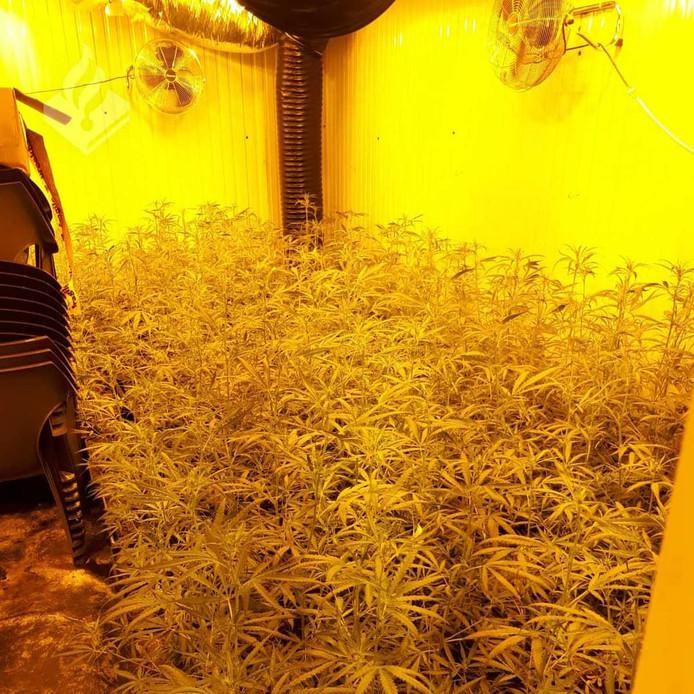 In een bedrijfspand aan de Tjonger trof de politie een actieve hennepkwekerij met 900 plantjes aan.