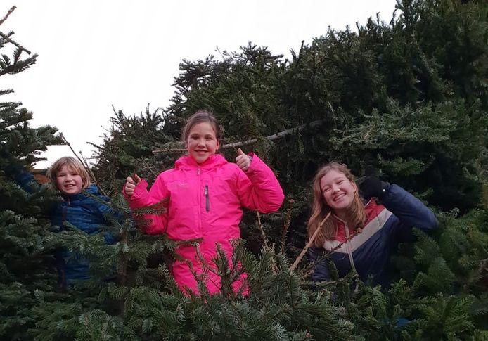 Juliette, Daphne en Femke met de opgehaalde kerstbomen van vorig jaar.