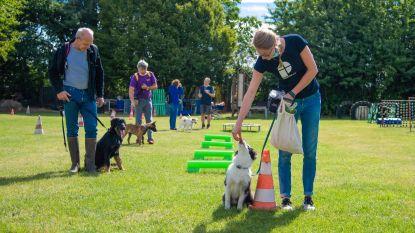 """Hondenmanieren Troef ziet aantal inschrijvingen nieuwe pups verdubbelen: """"Corona heeft mensen tijd gegeven voor een hond"""""""