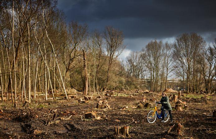 De bomen en struiken wijken voor de aanleg van een getijdengebied.