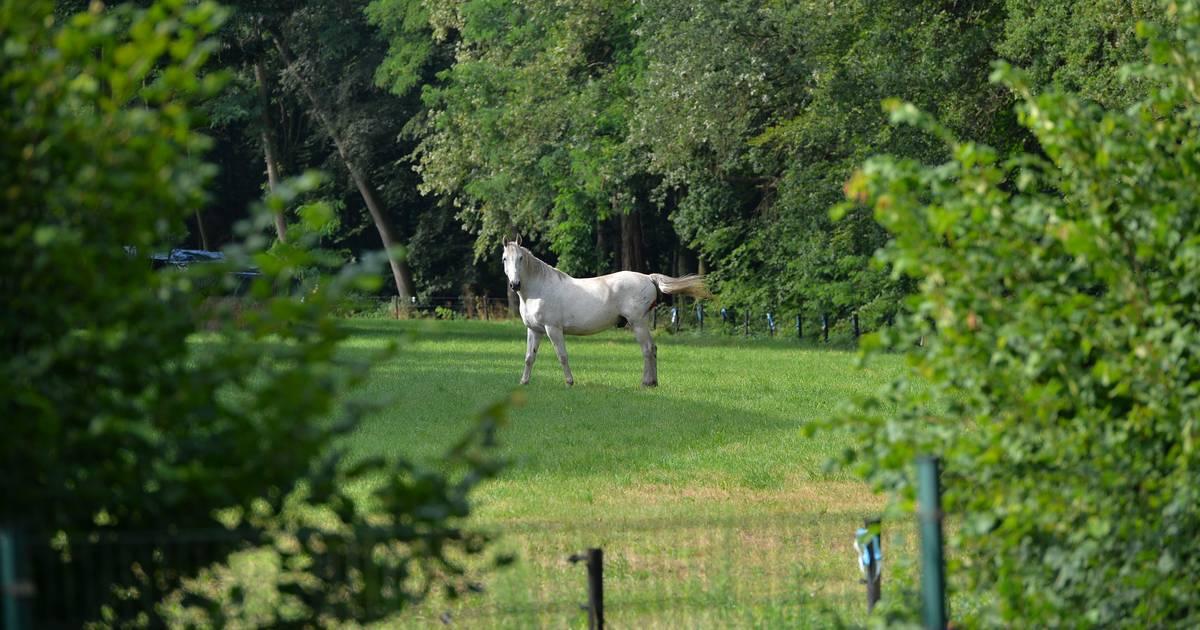 Geen treinverkeer tussen Apeldoorn en Deventer na aanrijding met paard.