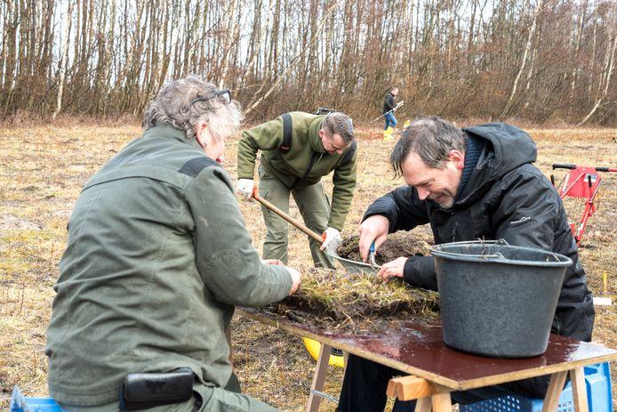 Boswachters Nellie Sinnige, Helmut van Pelt en Theo Muusse (vlnr) zijn bezig met verschillende methoden om de gele bieslelie te verwijderen op de Grevelingendam. Op de achtergrond elektrocuteert Arnold Heijmans de plantjes die hij vindt.