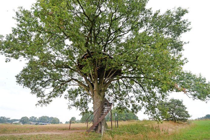 De boomtuin zoals 'ie er vorig jaar uitzag, toen de eik was genomineerd voor de titel mooiste boom van Nederland.