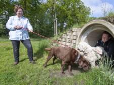 Ook in Albergen willen hondenbezitters een speelveld voor viervoeters
