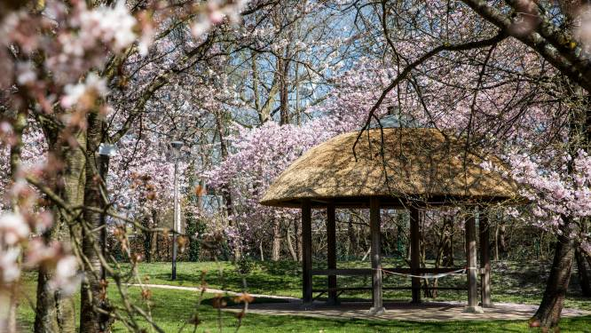 Japanse Tuin verwelkomt bezoekers 's avonds tijdens Obon Festival