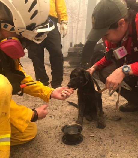 Puppy levend aangetroffen in asresten bosbrand Californië