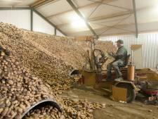 Duizenden aardappelen moeten de schuur uit