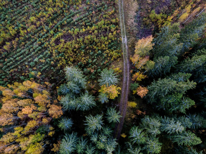 Waar bomen worden gekapt, verschijnen snel nieuwe. Beeld Marlena Waldthausen