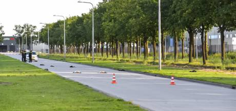 Groep ganzen doodgereden door politiewagen die op weg was naar noodsituatie in Tilburg