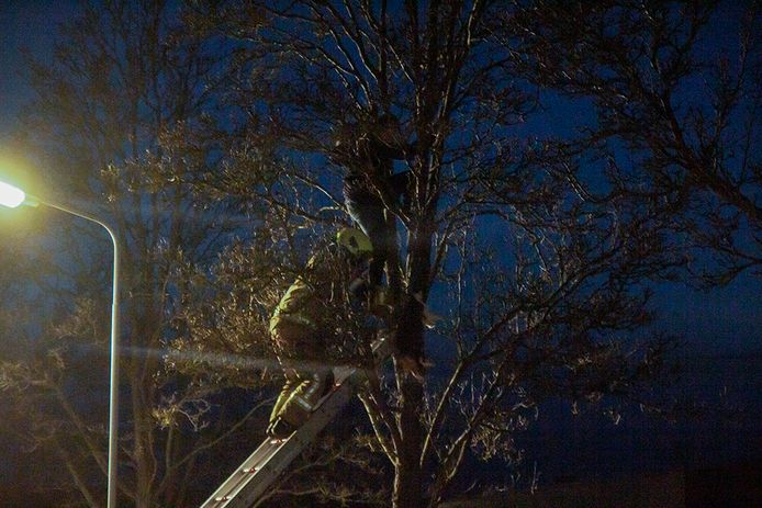 De brandweer haalt een meisje naar beneden dat een kat probeerde te redden uit een boom