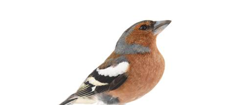 Tijd voor de Tuinvogeltelling! Dit zijn de meest voorkomende vogels in jouw tuin