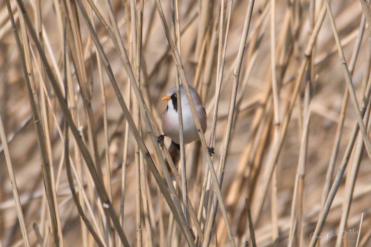 Ook de Vogelbescherming kreeg er meer leden bij. Beeld Geert Klein Breteler