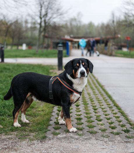 'Opruimplicht voor hondenpoep in losloopgebieden goed idee'