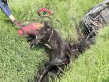 Tweespan met paarden belandt in sloot in Yerseke