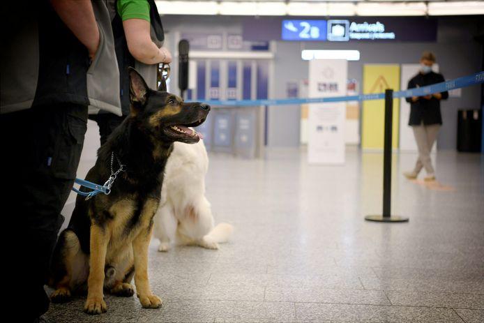 Des chiens pisteurs pour détecter le coronavirus à l'aéroport d'Helsinki en septembre dernier.